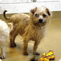 Adopt A Pet :: Scar - Miami, FL