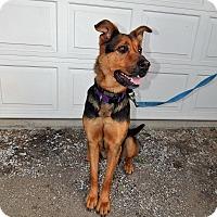 Adopt A Pet :: Luna - Cedar Rapids, IA