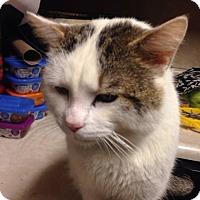 Adopt A Pet :: Loki - Hopkinsville, KY
