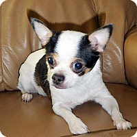 Adopt A Pet :: DIXIE - Wooster, OH