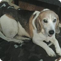 Adopt A Pet :: GUMBO - Albany, NY