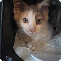 Adopt A Pet :: Mary Lou - New york, NY