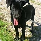 Adopt A Pet :: OCTAVIA