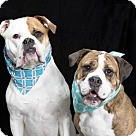 Adopt A Pet :: DAISY and POPPY