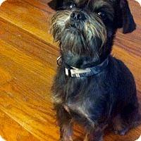Adopt A Pet :: Mr.Gizmo~cat friendly ! - Glastonbury, CT