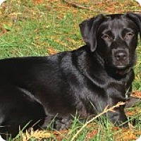 Adopt A Pet :: Stella - Seattle, WA