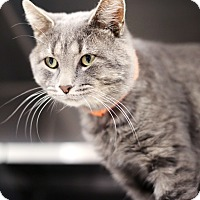 Adopt A Pet :: Galaxy - Appleton, WI