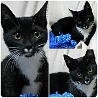 Adopt A Pet :: Peter - Forked River, NJ