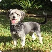 Adopt A Pet :: Tanya - Houston, TX