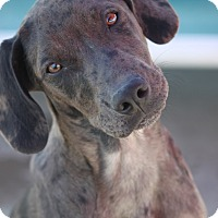 Adopt A Pet :: Simone MLK- PENDING ADOPTION! - Mahwah, NJ