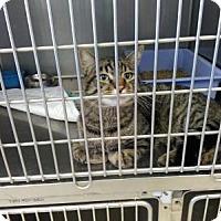 Adopt A Pet :: Simon - Sauk Rapids, MN