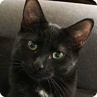 Adopt A Pet :: Willow2 - Walworth, NY