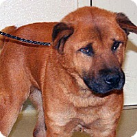 Adopt A Pet :: Red - Wildomar, CA