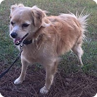 Adopt A Pet :: Buddy 2 - Savannah, GA