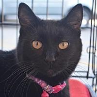 Adopt A Pet :: Molly - Spring, TX