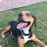 Adopt A Pet :: Norman - La Verne, CA