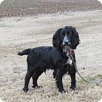 Adopt A Pet :: GROVER - Hartford, CT