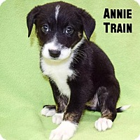Adopt A Pet :: Annie Train - Sacramento, CA