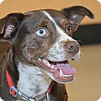 Adopt A Pet :: Abigail Shutto - Cullman, AL