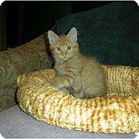 Adopt A Pet :: Rusty - Huffman, TX