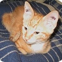 Adopt A Pet :: Lucius - Shelton, WA