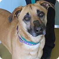 Adopt A Pet :: Hera - Manchester, CT