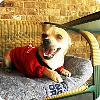 Adopt A Pet :: Jax - Marietta, GA