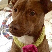 Adopt A Pet :: Abbie - North Olmsted, OH