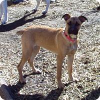 Adopt A Pet :: Penelope -