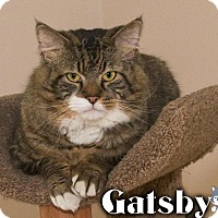 Adopt A Pet :: Gatsby - River Edge, NJ