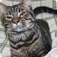 Adopt A Pet :: rickie - Danville, IL