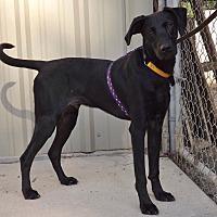 Adopt A Pet :: Nassau - Baton Rouge, LA