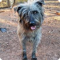 Adopt A Pet :: Doodle - Lawrenceville, GA