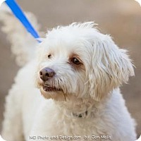 Adopt A Pet :: Gunnar (In Foster) - Scottsdale, AZ