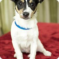 Adopt A Pet :: Sean Nanette pup--S - Alvin, TX