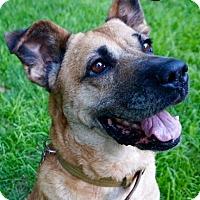 Adopt A Pet :: Sandy - Grand Rapids, MI