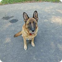 Adopt A Pet :: Bella - Portland, ME