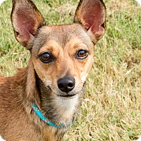 Adopt A Pet :: Rita - Bedminster, NJ