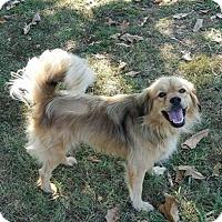 Adopt A Pet :: Ms.Marley - Washington, DC