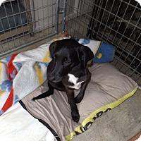 Adopt A Pet :: Zila - Quincy, IN