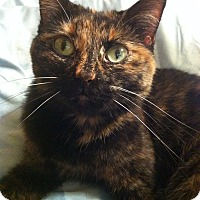 Adopt A Pet :: (Courtesy Post) Trixie - Breese, IL