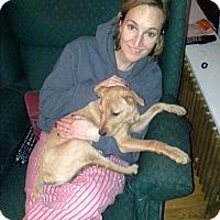 Adopt A Pet :: Sierra - Homer, NY