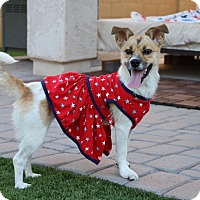 Adopt A Pet :: Phoebe - Litchfield Park, AZ
