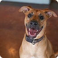 Adopt A Pet :: Koda - San Antonio, TX