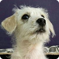 Adopt A Pet :: Twizzler - Thousand Oaks, CA