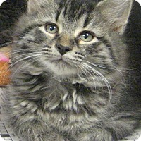 Adopt A Pet :: squidward (liberty church) - Johnson City, TN
