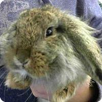 Adopt A Pet :: A703477 - Sacramento, CA