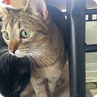 Adopt A Pet :: Viola - Columbus, OH