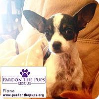 Adopt A Pet :: Fiona (FiFi) - Los Angeles, CA