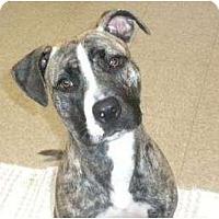 Adopt A Pet :: Mindy - Douglas, MA